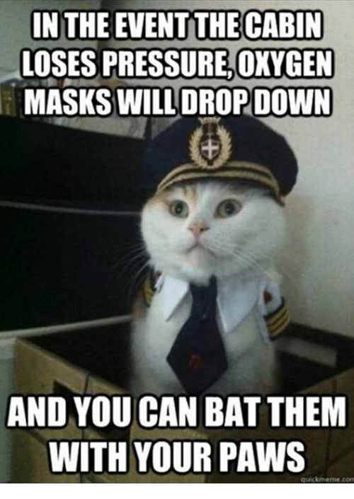 Memes, Pressure, and Oxygen: IN THE EVENT THE CABIN  LOSES PRESSURE,OXYGEN  MASKS WILL DROP DOWN  AND YOU CAN BAT THEM  WITH YOUR PAWS  quickmerme com