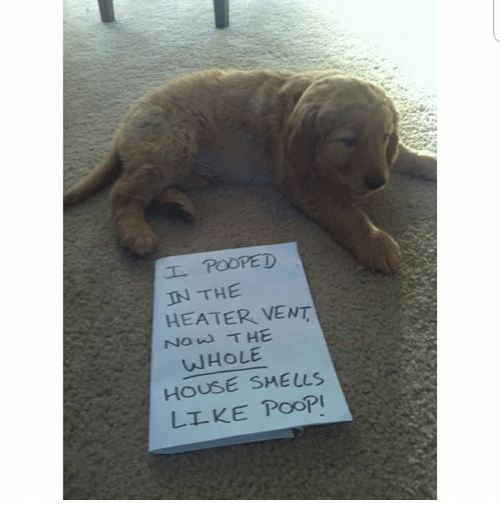 Memes, Poop, and House: IN THE  HEATER VENT  NOw T HE  WHOLE  HOUSE SMELLS  LLKE PooP