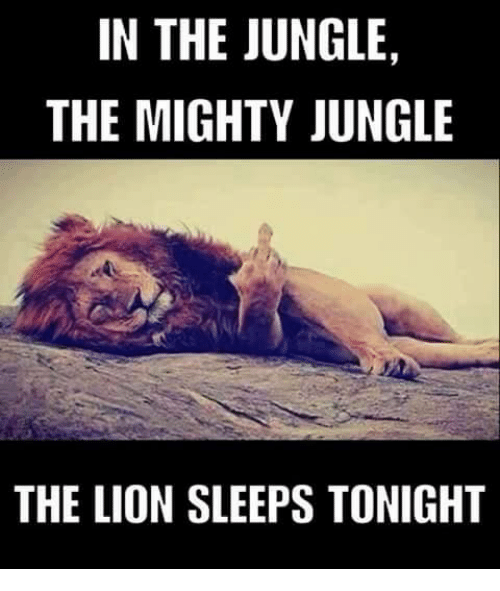 in the jungle the mighty jungle the lion sleeps tonight 7693808 ✅ 25 best memes about the lion sleeping the lion sleeping memes,Lions Meme