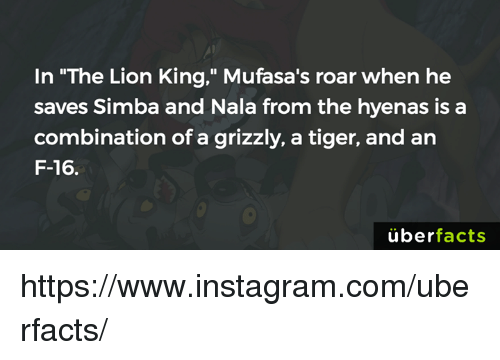 "Memes, Uber, and The Lion King: In ""The Lion King,"" Mufasa's roar when he  saves Simba and Nala from the hyenas is a  combination of a grizzly, a tiger, and an  F-16  uber  facts https://www.instagram.com/uberfacts/"
