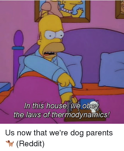 Memes, Parents, and Reddit: In this housel we obey  the laws of thermodynamics! Us now that we're dog parents 🐕 (Reddit)