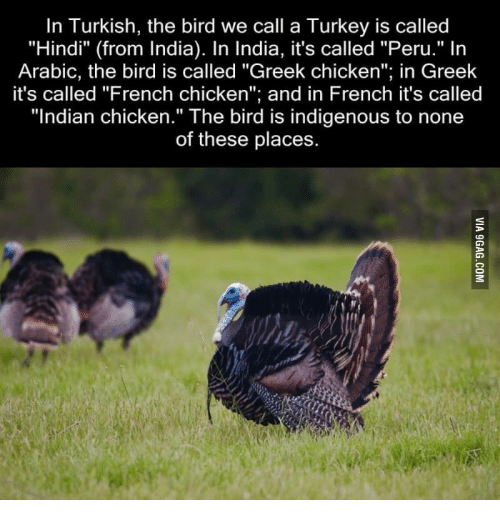 """Chicken, India, and Peru: In Turkish, the bird we call a Turkey is called  """"Hindi"""" (from India). In India, it's called """"Peru."""" In  Arabic, the bird is called """"Greek chicken  in Greek  it's called """"French chicken  and in French it's called  """"Indian chicken."""" The bird is indigenous to none  of these places"""