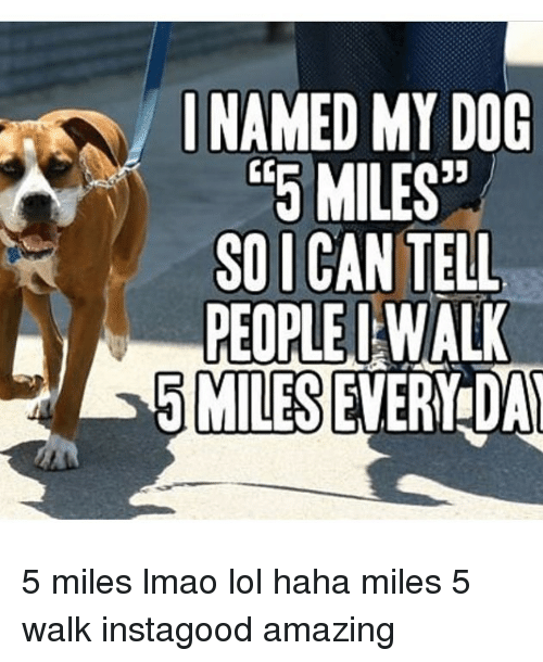 Lmao, Lol, and Memes: INAMED MY DOG  5MILES  SOI CAN TELL  PEOPLE I WALL  5 MILES EVERY DA 5 miles lmao lol haha miles 5 walk instagood amazing