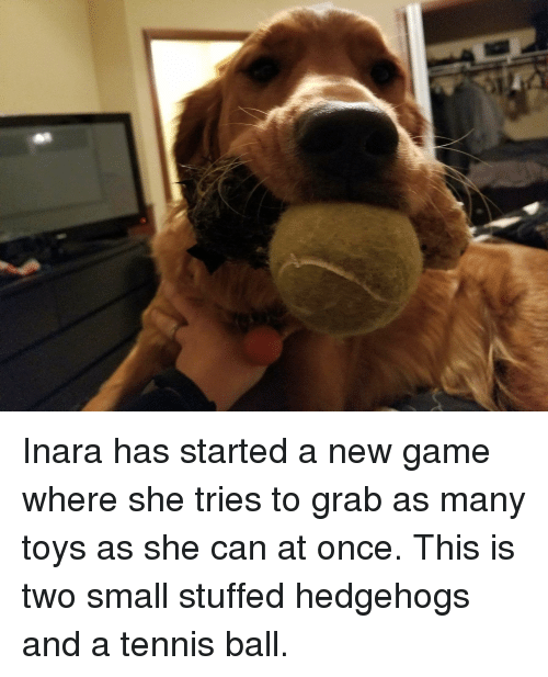 Game, Tennis, and Toys: Inara has started a new game where she tries to grab as many toys as she can at once. This is two small stuffed hedgehogs and a tennis ball.