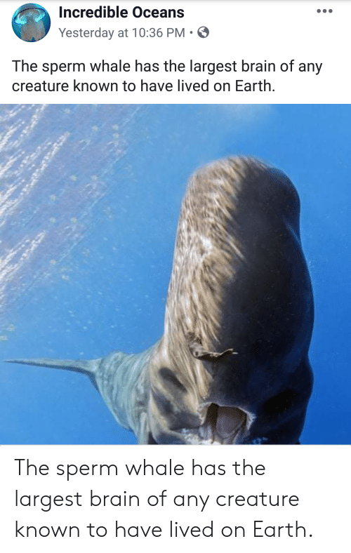 Brain, Earth, and Creature: Incredible Oceans  Yesterday at 10:36 PM  The sperm whale has the largest brain of any  creature known to have lived on Earth. The sperm whale has the largest brain of any creature known to have lived on Earth.