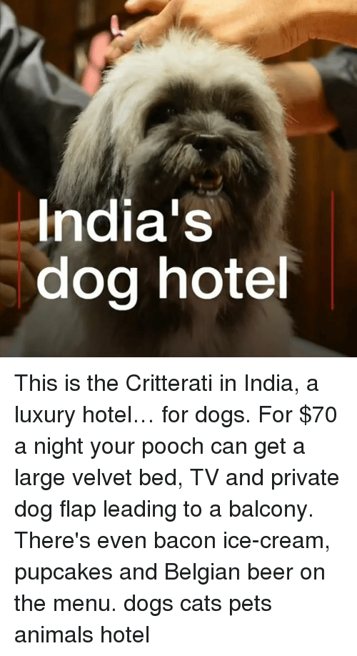 Animals, Beer, and Cats: India's  dog hote This is the Critterati in India, a luxury hotel… for dogs. For $70 a night your pooch can get a large velvet bed, TV and private dog flap leading to a balcony. There's even bacon ice-cream, pupcakes and Belgian beer on the menu. dogs cats pets animals hotel