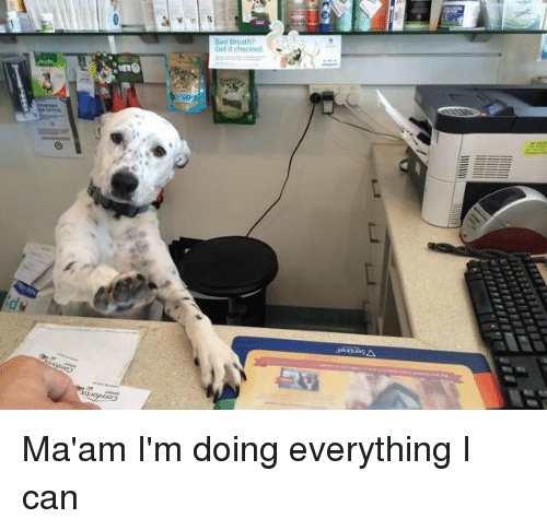 Girl Memes, Can, and Ims: ine Ma'am I'm doing everything I can