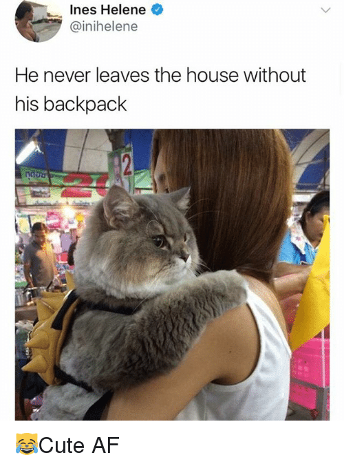 Af, Memes, and House: Ines Helene  @inihelene  He never leaves the house without  his backpack  Mou 😹Cute AF