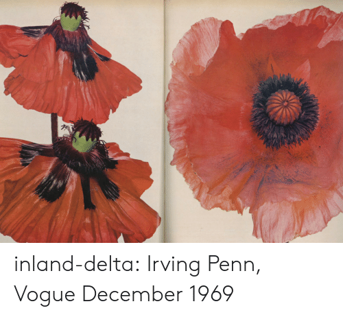Tumblr, Blog, and Delta: inland-delta: Irving Penn, Vogue December 1969