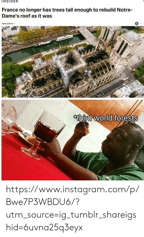 Instagram, Tumblr, and France: INSIDER  France no longer has trees tall enough to rebuild Notre  Dame's roof as it was  0  Ashley Colman  sthind world forests https://www.instagram.com/p/Bwe7P3WBDU6/?utm_source=ig_tumblr_shareigshid=6uvna25q3eyx