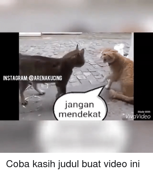 Instagram, Memes, and Video: INSTAGRAM:@ARENAKUCING  Jangan  mendekat  Made With  Viva Video Coba kasih judul buat video ini