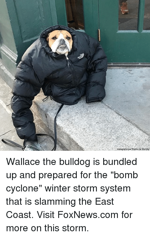 "Instagram, Memes, and Winter: Instagram/Joe Thistle via Storyful Wallace the bulldog is bundled up and prepared for the ""bomb cyclone"" winter storm system that is slamming the East Coast. Visit FoxNews.com for more on this storm."
