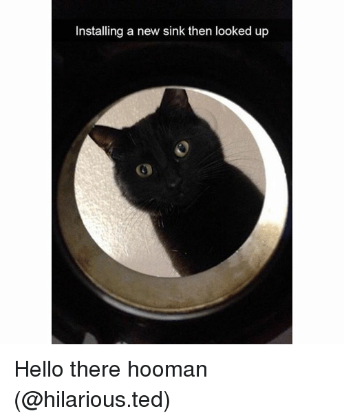 Funny, Hello, and Ted: Installing a new sink then looked up Hello there hooman (@hilarious.ted)