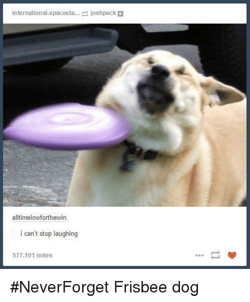 international spacesta josh peck alltimelowforthewin i cant stop laughing 577 101 18174060 ✅ 25 best memes about dog dog memes
