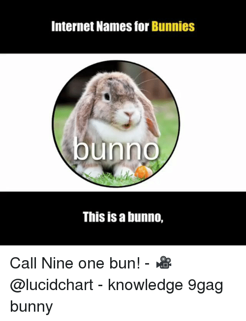 9gag, Bunnies, and Internet: Internet Names for Bunnies  unno  This is a bunno, Call Nine one bun! - 🎥@lucidchart - knowledge 9gag bunny