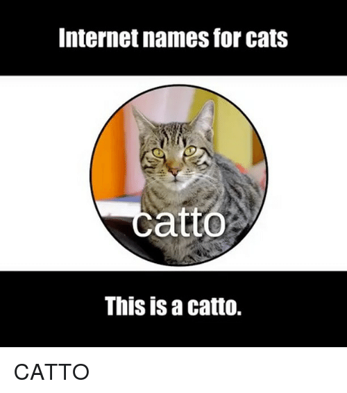 Cats French Names