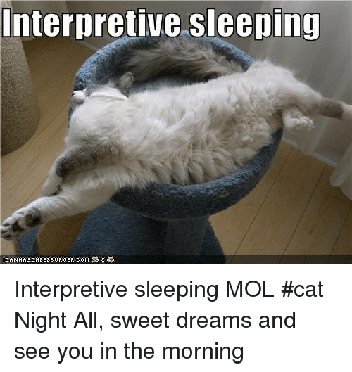 Memes, Sleeping, and Dreams: Interpretive sleeping Interpretive sleeping    MOL  #cat     Night All, sweet dreams and see you in the morning