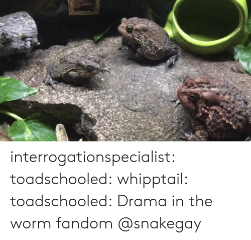 Tumblr, Blog, and Http: interrogationspecialist:  toadschooled:  whipptail:  toadschooled: Drama in the worm fandom   @snakegay