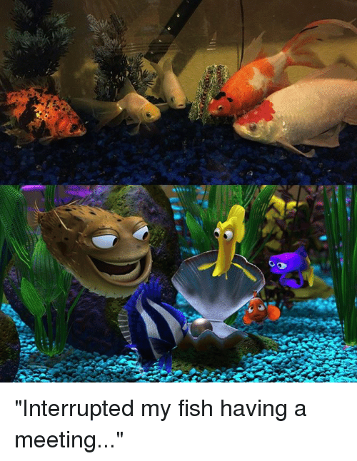 "Dank, 🤖, and My Fish: ""Interrupted my fish having a meeting..."""