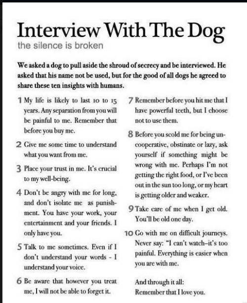 """Dogs, Food, and Friends: Interview With The Dog  the silence is broken  We asked a dog to pull aside the shrou  share these ten insights with humans.  d of secrecy and be interviewed. He  asked that his name not be used, but for the good of all dogs he agreed to  1 My life is likely to last o to 15 7 Remember before you hit me that I  years. Any separation fromoul have powerful teeth, but I choose  be painful to me. Remember that  before you buy me.  not to use them  8 Before you scold me for being un-  cooperative, obstinate or lazy, ask  ourself if something might be  wrong with me. Perhaps I'm not  getting the right food, or I've been  out in the sun too long, or my heart  2 Give me some time to understand  what you want from me  3 Place your trust in me. It's crucial  to my well-being  4 Don't be angry with me for long is getting older and weaker  and don't isolate me as punis  ment. You have your work, your  9 Take care of me when I get old.  nt and your friends.  Youll be old one day  only have you.  10 Go with me on difficult journeys.  Never say: """"I can't watch-it's too  painful. Everything is easier wher  5 Talk to me sometimes. Even if I  don't understand your words  understand your voice.  you are with me  6 Be aware that however you treat And though it all:  me, I will not be able to forget it.  Remember that I love you."""