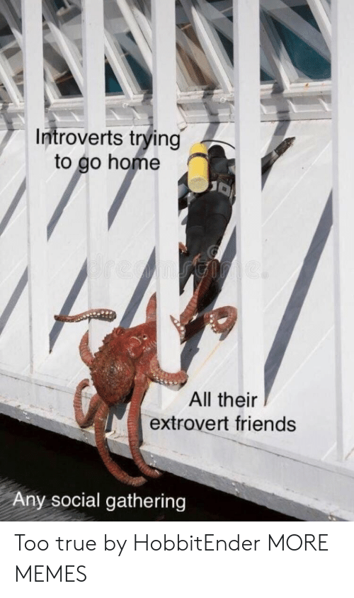 Dank, Friends, and Memes: Introverts trying  to go home  All their  extrovert friends  Any social gathering Too true by HobbitEnder MORE MEMES