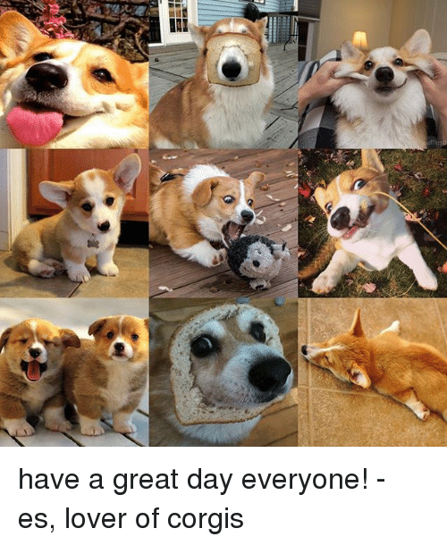 Iri Have A Great Day Everyone Es Lover Of Corgis Meme On Me Me