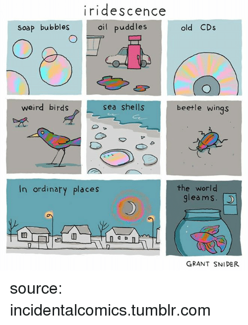 Tumblr, Weird, and Birds: iridescence  oil puddle:s  soap bubbles  old CDs  weird birds  sea shells  beetle wings  In ordinary places  the world  gleams.  GRANT SNIDER source: incidentalcomics.tumblr.com