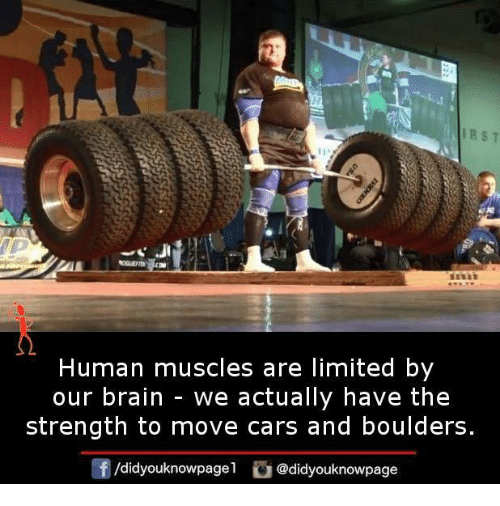 irst human muscles are limited by our brain we actually have the, Muscles