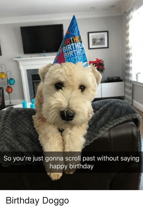 Birthday, Happy Birthday, and Happy: IRTHD  İRTHD  So you're just gonna scroll past without saying  happy birthday Birthday Doggo