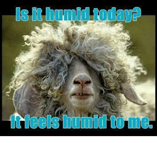is it humid today it feels humid to me 26004316 is it humid today? it feels humid to me meme on me me