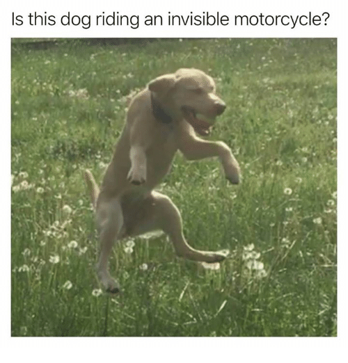 Dank, Motorcycle, and 🤖: Is this dog riding an invisible motorcycle?