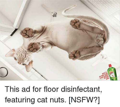 Is what always not is hind this ad for floor disinfectant featuring cats funny and nsfw is what always not is hind this ad publicscrutiny Image collections