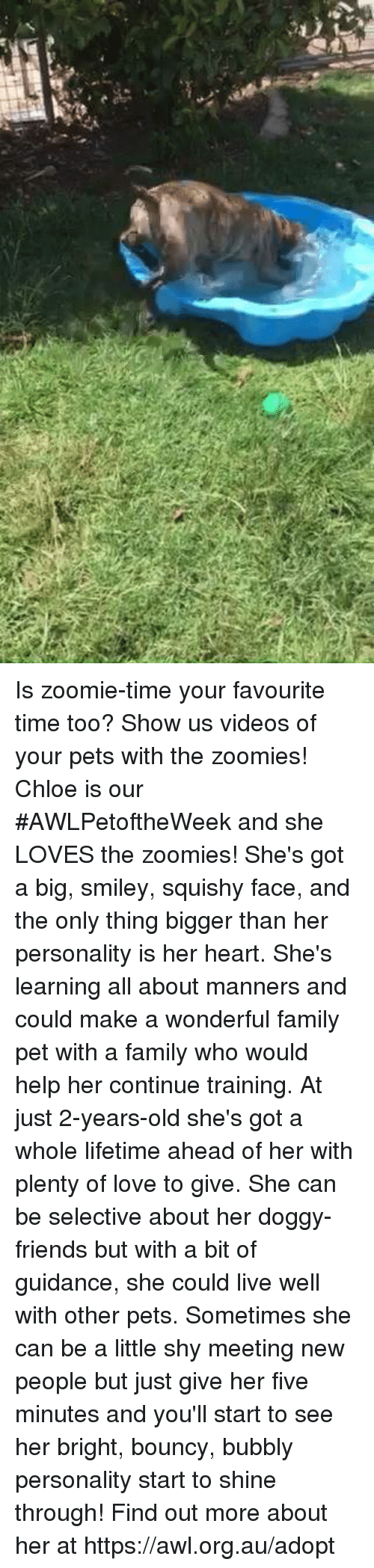 Family, Friends, and Love: Is zoomie-time your favourite time too? Show us videos of your pets with the zoomies! Chloe is our #AWLPetoftheWeek and she LOVES the zoomies!   She's got a big, smiley, squishy face, and the only thing bigger than her personality is her heart.   She's learning all about manners and could make a wonderful family pet with a family who would help her continue training.  At just 2-years-old she's got a whole lifetime ahead of her with plenty of love to give.   She can be selective about her doggy-friends but with a bit of guidance, she could live well with other pets.   Sometimes she can be a little shy meeting new people but just give her five minutes and you'll start to see her bright, bouncy, bubbly personality start to shine through!   Find out more about her at https://awl.org.au/adopt