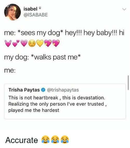 "Funny, Baby, and Dog: isabel""  @ISABABE  me: *sees my dog* hey!!! hey baby!!! hi  my dog: *walks past me*  me:  Trisha Paytas @trishapaytas  This is not heartbreak, this is devastation.  Realizing the only person I've ever trusted,  played me the hardest Accurate 😂😂😂"