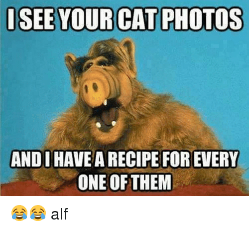 Isee Your Cat Photos Andi Have A Recipe For Every One Of Them