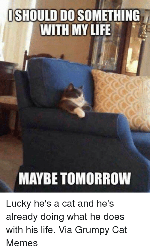 Memes, Grumpy Cat, and 🤖: ISHOULDIDOSOMETHING  WITH MY LIFE  MAYBE TOMORROW Lucky he's a cat and he's already doing what he does with his life. Via Grumpy Cat Memes