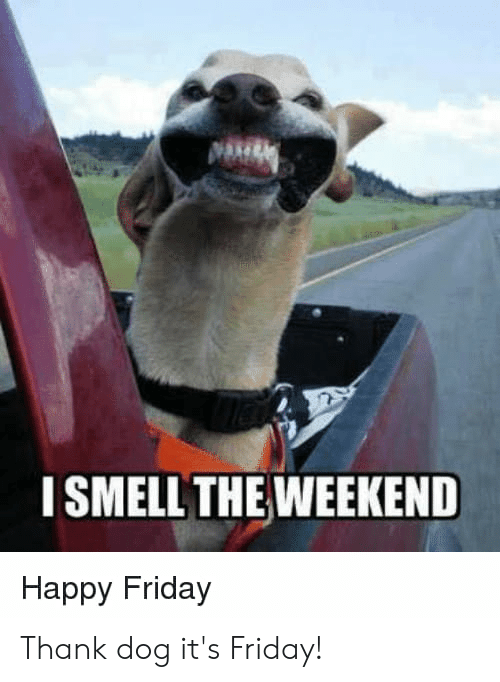 ISMELL THE WEEKEND Happy Friday Thank Dog It's Friday! | Friday ...
