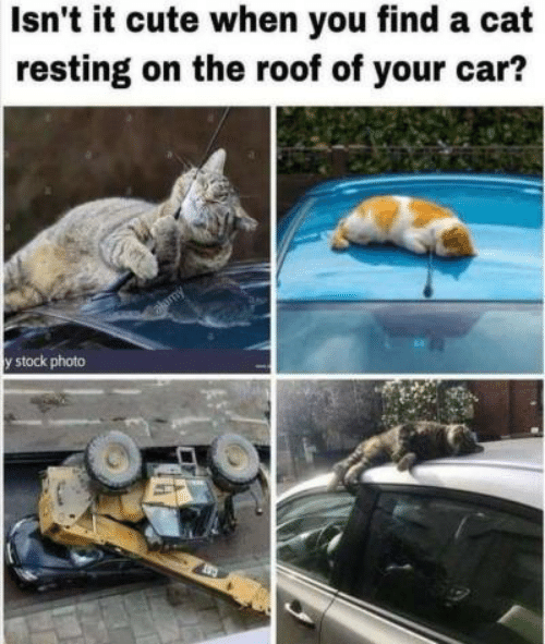 Isn't It Cute When You Find a Cat Resting on the Roof of
