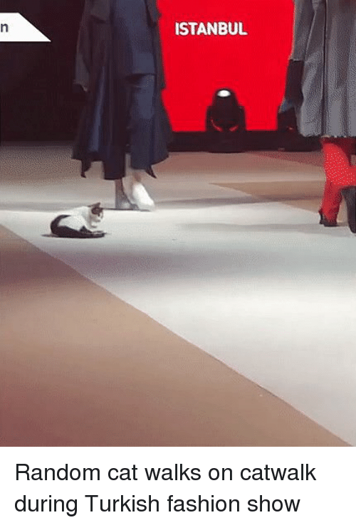 2ce9dc47ed ISTANBUIL Random Cat Walks on Catwalk During Turkish Fashion Show ...