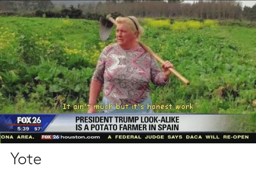 Work, Houston, and Potato: It ain 't much but it's honest work  FOX26  5:39 57  PRESIDENT TRUMP LOOK-ALIKE  IS A POTATO FARMER IN SPAIN  ONA AREA. FOX 26 houston.com A FEDERAL JUDGE SAYS DACA WILL RE-OPEN Yote