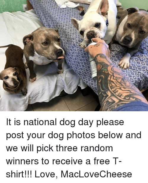 Love, Memes, and Free: It is national dog day please post your dog photos below and we will pick three random winners to receive a free T-shirt!!!   Love, MacLoveCheese