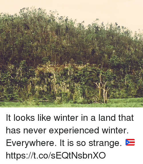 Memes, Winter, and Never: It looks like winter in a land that has never experienced winter. Everywhere.  It is so strange. 🇵🇷 https://t.co/sEQtNsbnXO