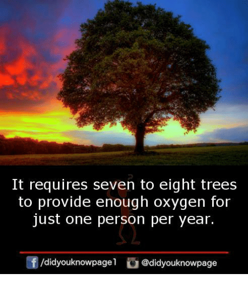 Memes, Oxygen, and Trees: It requires seven to eight trees  to provide enough oxygen for  just one person per year.  /didyouknowpagel @didyouknowpage