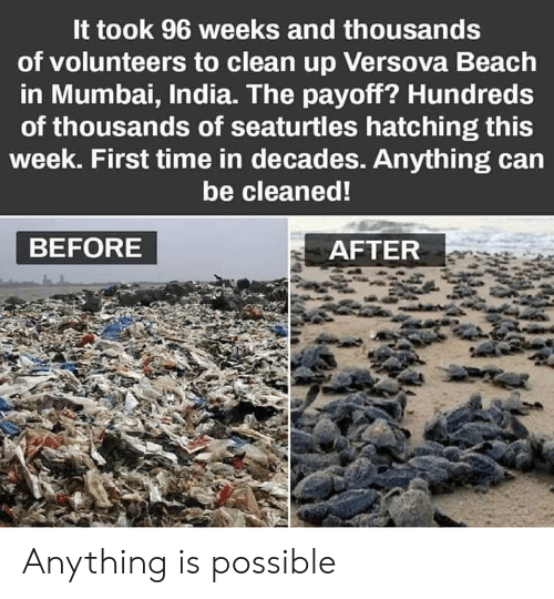 Beach, India, and Time: It took 96 weeks and thousands  of volunteers to clean up Versova Beach  in Mumbai, India. The payoff? Hundreds  of thousands of seaturtles hatching this  week. First time in decades. Anything can  be cleaned!  BEFORE  AFTER Anything is possible