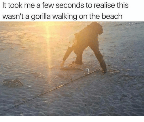 Memes, Beach, and 🤖: It took me a few seconds to realise this  wasn't a gorilla walking on the beach