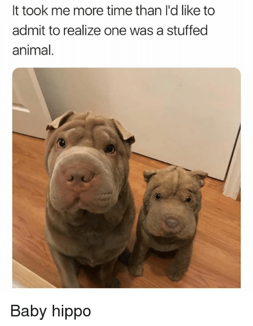 Memes, Animal, and Time: It took me more time than I'd like to  admit to realize one was a stuffed  animal Baby hippo