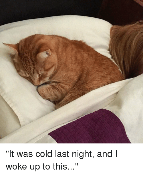 Cold Last Night >> It Was Cold Last Night And I Woke Up To This Meme On Me Me