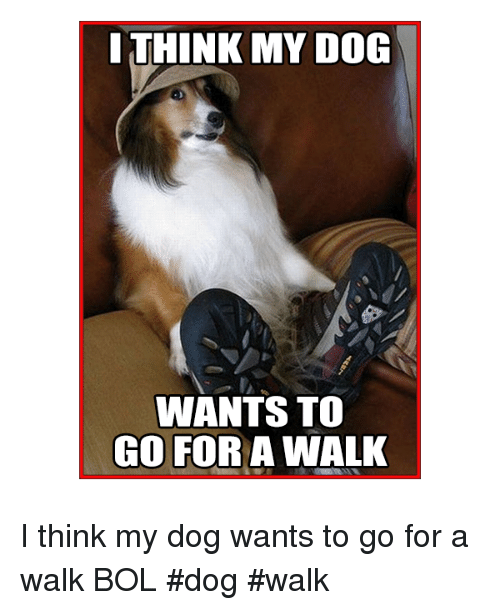 Memes, 🤖, and Bol: ITHINK MY DOG  WANTS TO  GO FOR A WALK I think my dog wants to go for a walk   BOL  #dog #walk