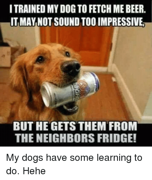 Beer, Dogs, and Funny: ITRAINED MY DOG TO FETCH ME BEER.  IT MAY NOT SOUND TOO IMPRESSIVE  BUT HE GETS THEM FROM  THE NEIGHBORS FRIDGE!