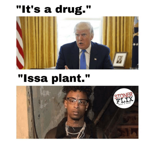 "Drugs, Memes, and News: ""It's a drug.""  ""Issa plant.""  FLIX  NEWS & MUSIC"